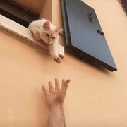 Тёплые коты и другие шерстяные group on My World