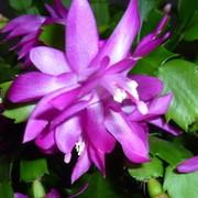 Ирина Токарева on My World.